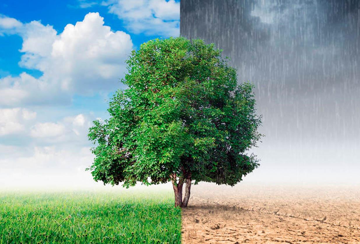 Reducción deforestación y desertificación